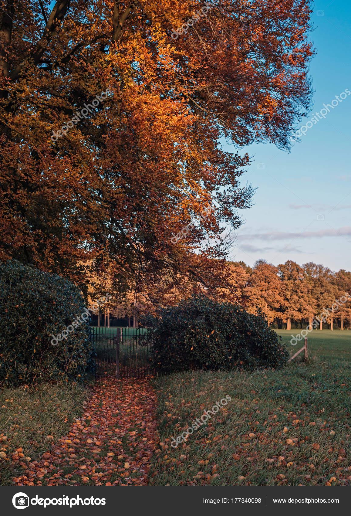 Haie et clôture de jardin — Photographie ysbrand © #177340098