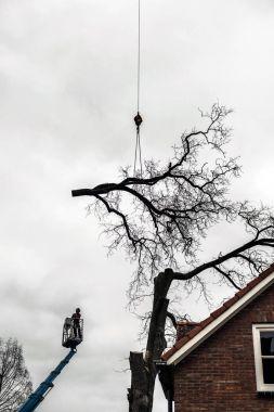 Tree surgeon in crane