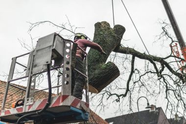 Man putting tree in right direction
