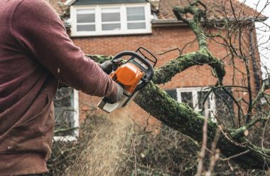 Arborist chainsawing pieces of wood