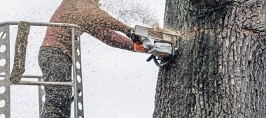 Tree surgeon cutting tree trunk