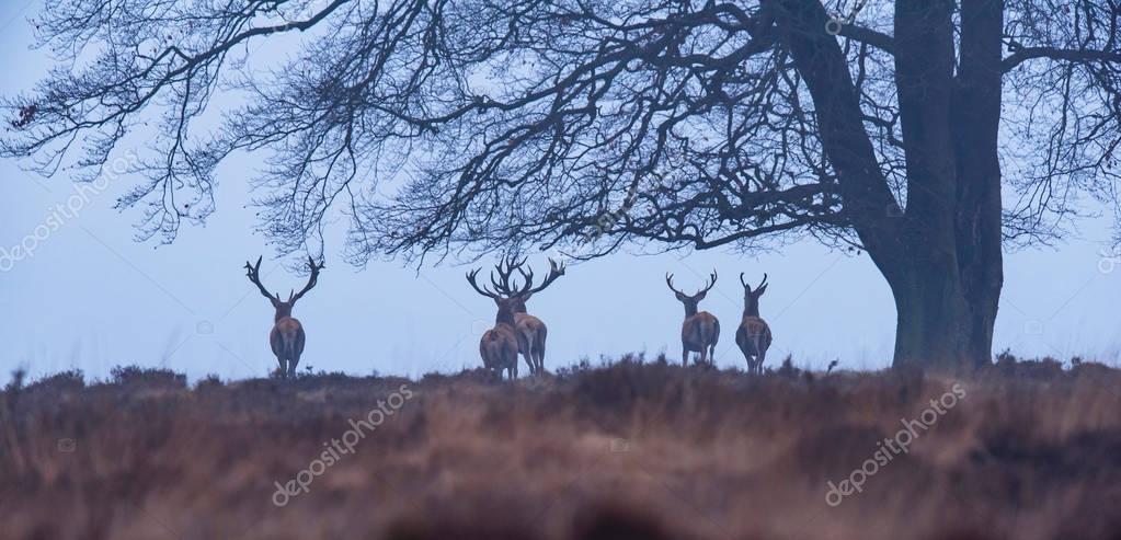 deer under winter tree