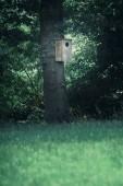 Fotografia gufi in legno scatola di nidificazione