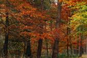 Fogliame giallo, arancio e rosso nella foresta autunnale.