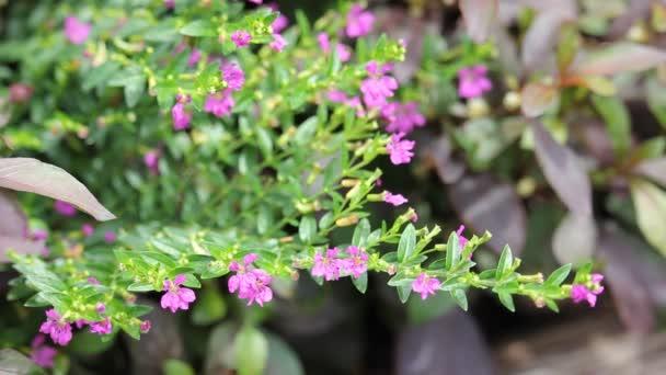Small False heather Flower