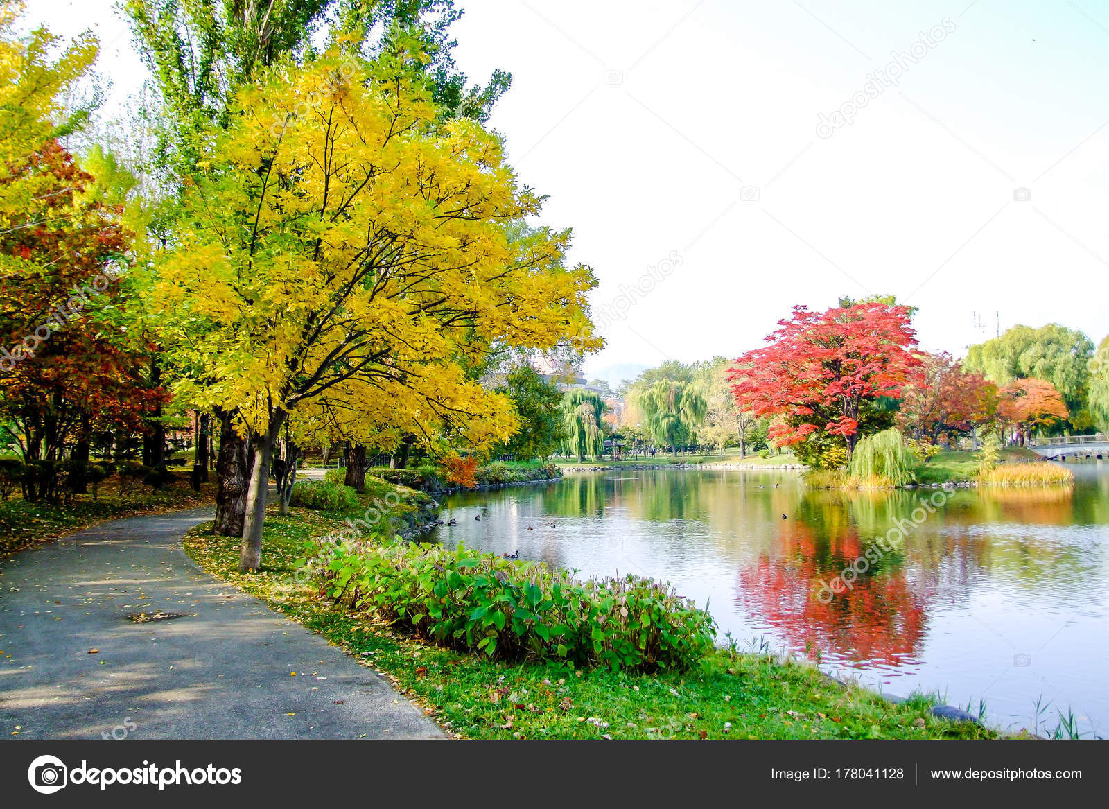 Colorful Leaves Trees Lakeside Autumn Blue Sky White Clouds — Stock ...