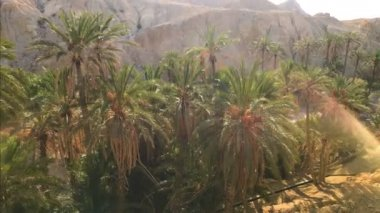 Beautiful Oasis Landscape And Rocky Mountains View. 4K Video/ Amazing nature in Africa. Palm trees plant in oasis sahara, Tunisia.