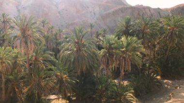 Beautiful Oasis In Africa / Amazing shot of palm trees and rocky mountains if african oasis.