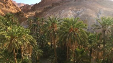 Amazing Oasis With Palm Trees In Rocky Canyon / Beautiful nature, palm trees plants in rocky canyon. Location: Oasis in sahara, Tunisia, Africa.