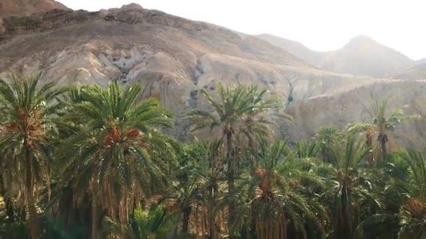 Krásná krajina Oasis v Africe. Palm stromy rostliny v Sahara / úžasné stabilizované záběr oáza v africké Sahary. Krásný pohled palem a rocky mountains