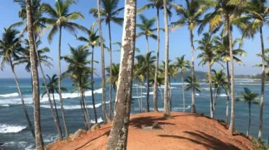 Exotic Palm Trees And Ocean Waves / Beautiful island full od exotic palm trees, amazing ocean view, tropical beach