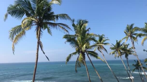 Exotické palmy / krásný tropický ostrov s palmami a úžasný výhled na oceán