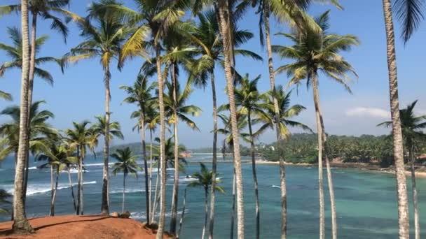 Exotické tropické pláže s Palm stromy a úžasné Ocean / krásný oceán, Luxusní tropický ostrov plný palem a mořských vln