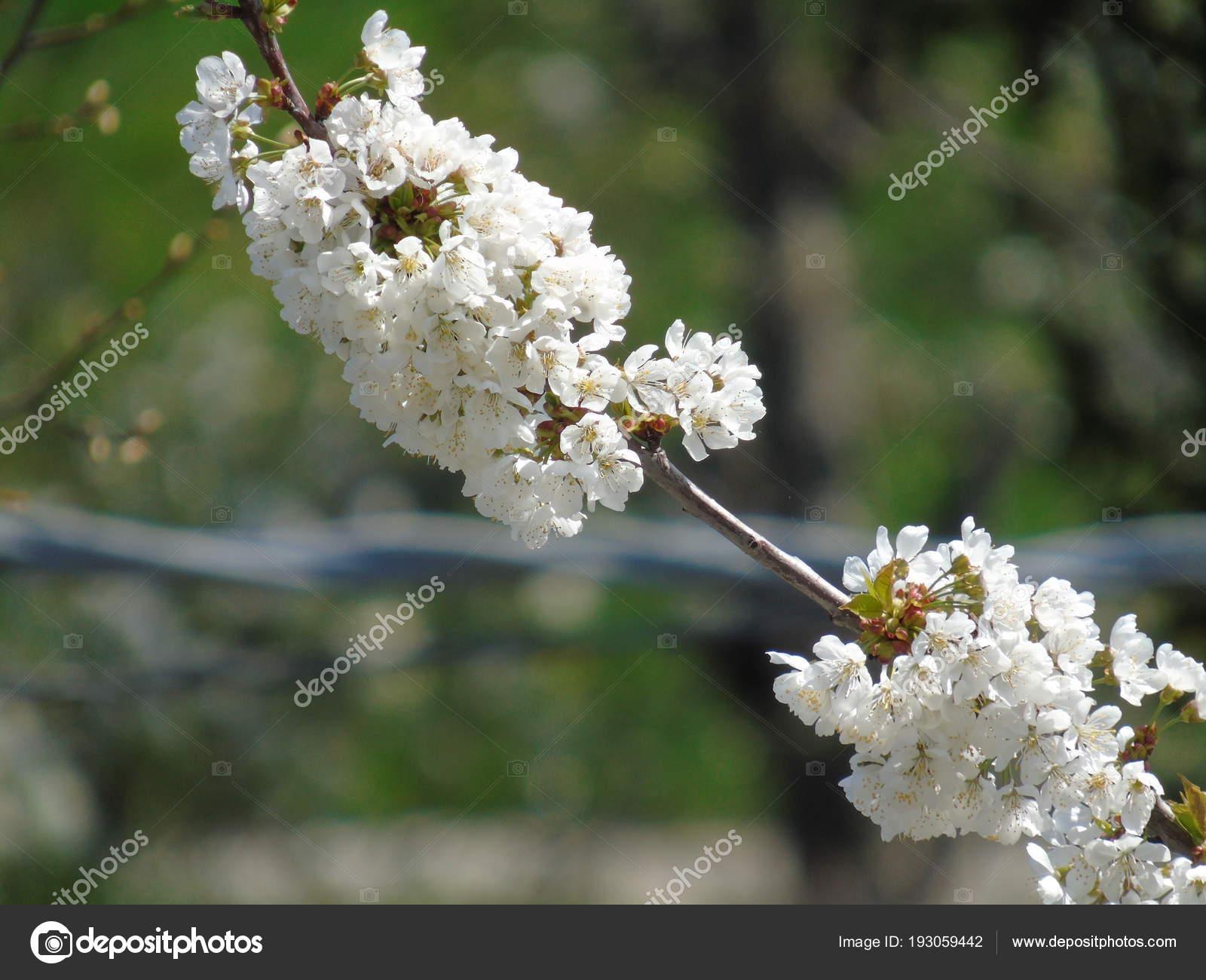 Único Uñas Flores Friso - Ideas Para Esmaltes - aroson.com