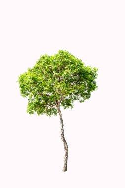 Green tree on light background stock vector
