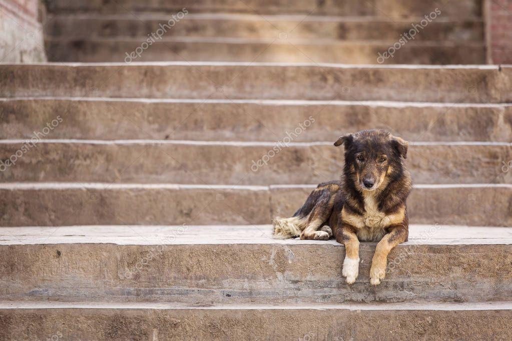 Homeless dog resting on stairs in Kathmandu, Nepal