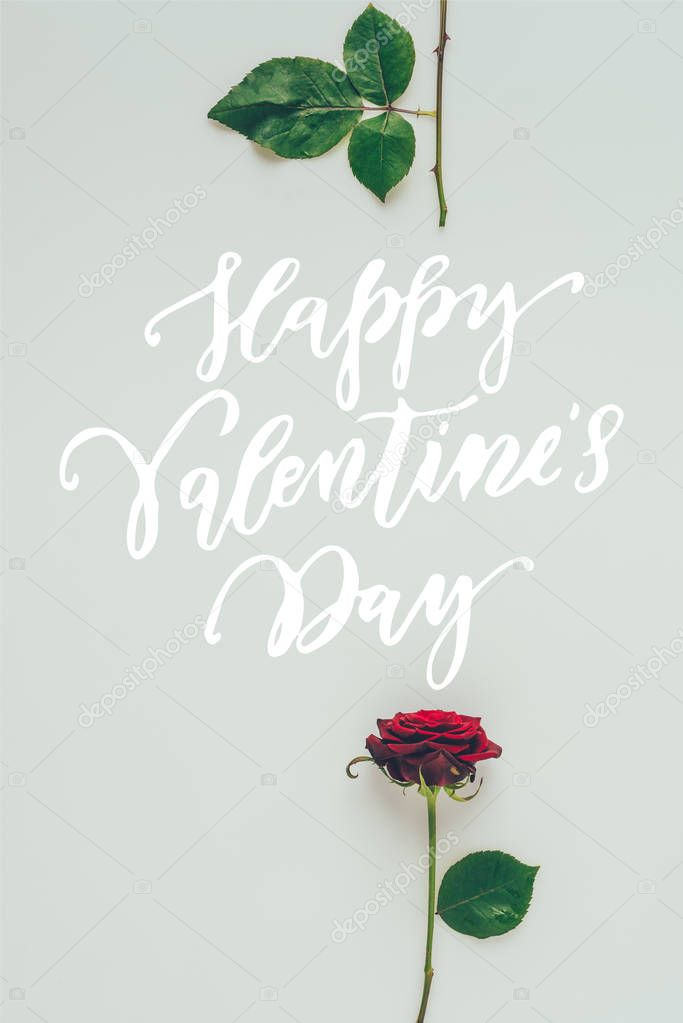 Top view of red rose parts with text happy valentines day isolated on white