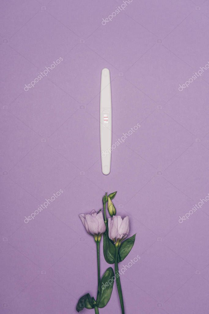 top view of arranged pregnancy test and flowers with green leaves isolated on purple