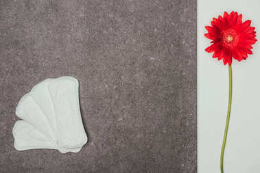top view of arranged menstrual pads and red flower on grey surface