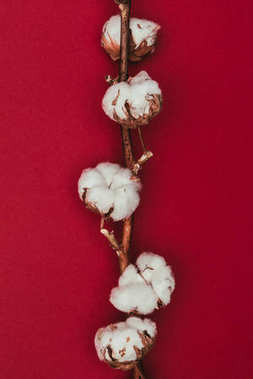 close up view of cotton flowers on twig isolated on red