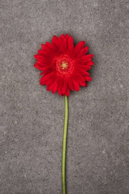 close up view of beautiful red flower on grey surface