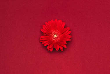 close up view of beautiful red flower isolated on red