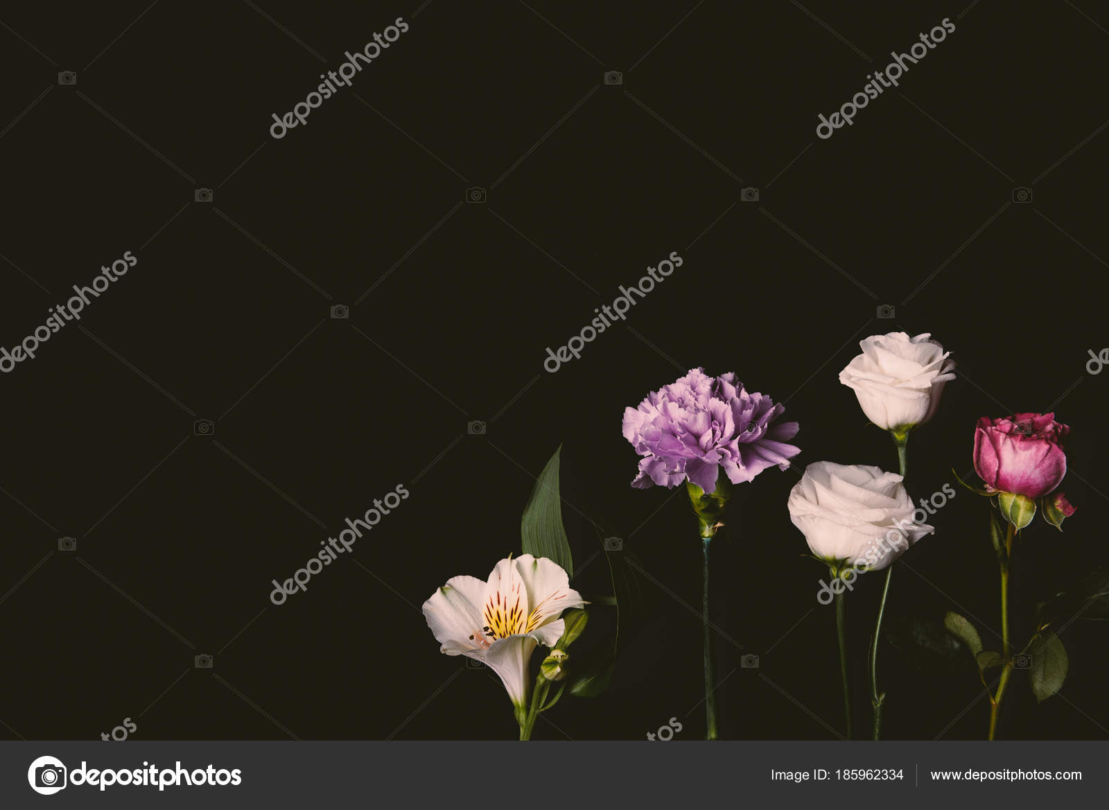 Close View Beautiful Floral Composition Pink Purple Flowers Isolated