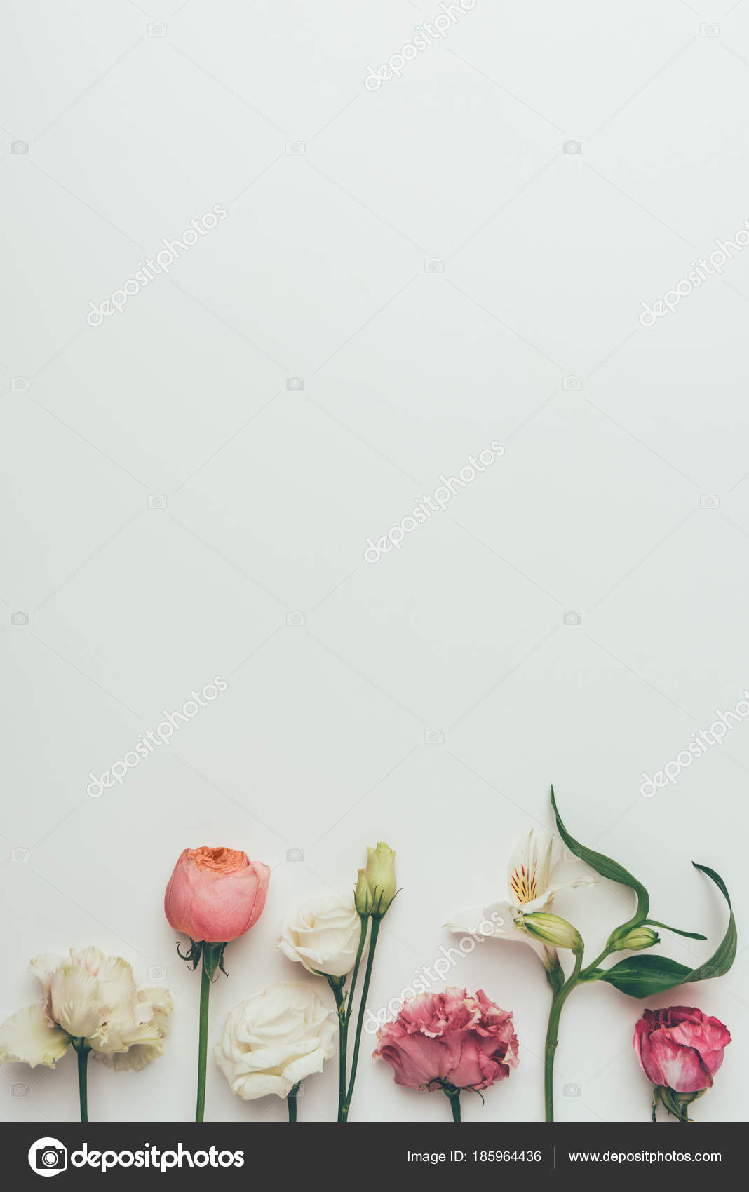 Beautiful Blooming White Pink Flowers Grey Background Stock Photo