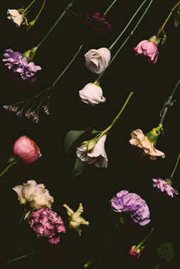 collection of beautiful various blooming flowers isolated on black