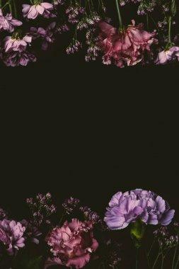 beautiful elegant pink and purple flowers isolated on black