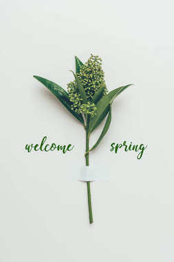 beautiful flower buds on branch with green leaves and inscription welcome spring on grey
