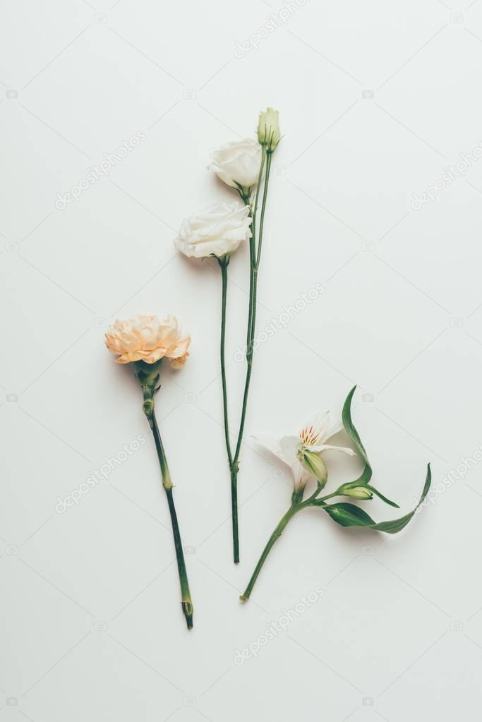close-up view of beautiful tender blooming flowers isolated on grey