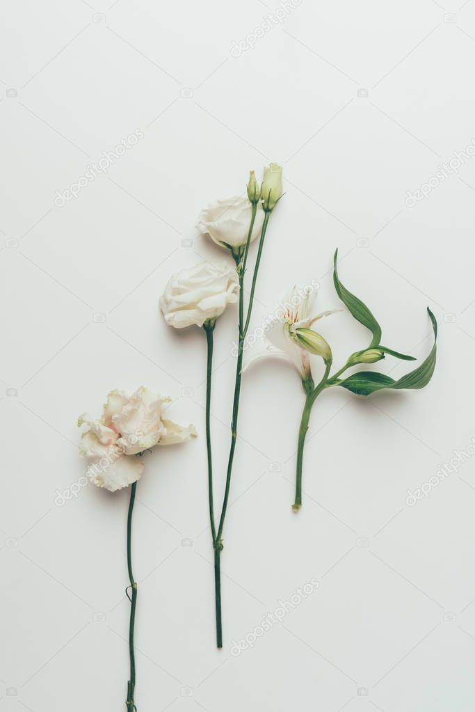 close-up view of beautiful tender white blooming flowers isolated on grey