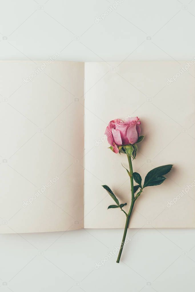 top view of beautiful pink rose flower and blank greeting card isolated on grey