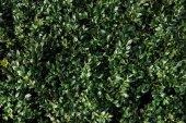 Fotografie Zelené pole rostlina listy textury