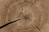 Cyklické řezali dřevo detailní pozadí