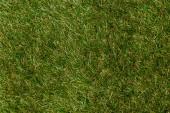 Draufsicht auf grünes Gras, Earth Day-Konzept