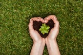 Photo cropped image of woman holding heart shaped soil with succulent in hands above green grass, earth day concept