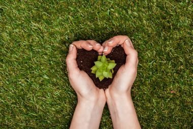 cropped image of woman holding heart shaped soil with succulent in hands above green grass, earth day concept