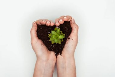 cropped image of woman holding heart shaped soil with succulent in hands isolated on white, earth day concept