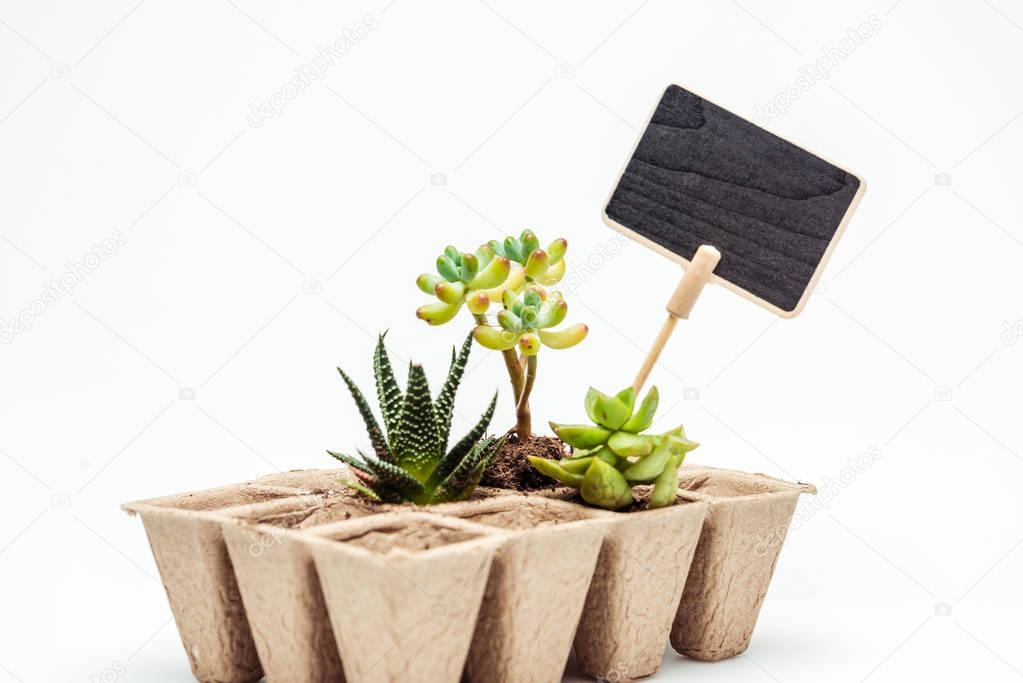 potted succulents with blackboard isolated on white, earth day concept