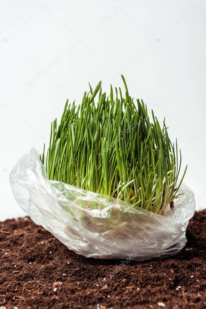 seedling in plastic bag on soil isolated on white, earth day concept
