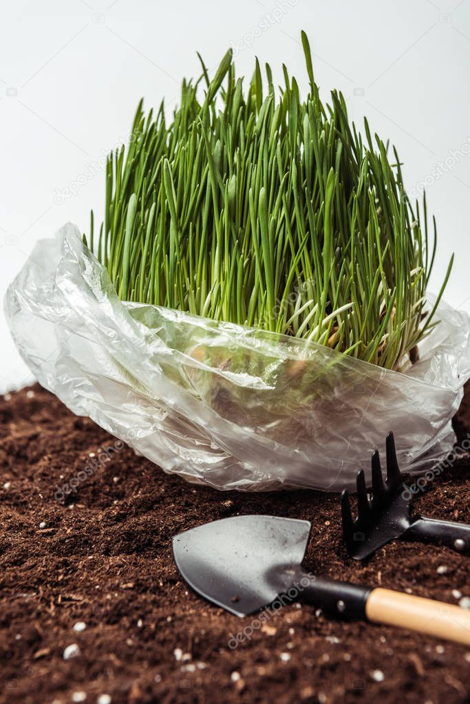 seedling in plastic bag on soil with garden shovel and rake isolated on white, earth day concept