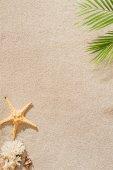 Fotografie pohled shora mušle, korály a hvězdice leží na písečné pláži s palmovou ratolestí