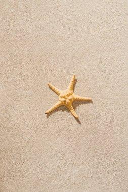 top view of dry starfish lying on sandy beach