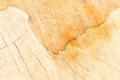 Fotografia Concetto di pavimenti in legno e falegnameria con superficie in legno veduto