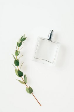 top view of bottle of perfume with beautiful green branch on white