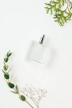 top view of bottle of perfume with green branches on white