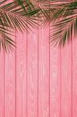 felülnézet palm elhagyja a rózsaszín fa felülettel