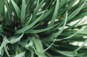 Fotografie full frame image of grass background